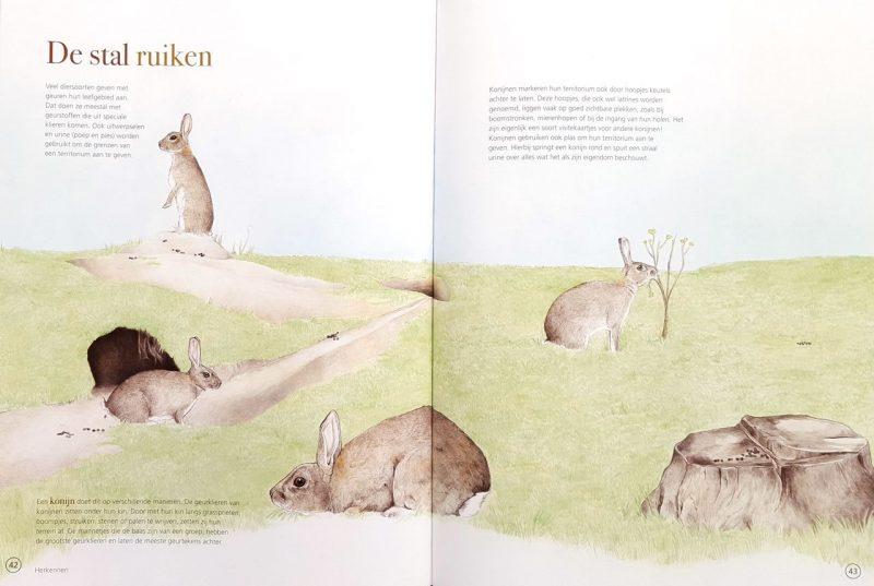 Stef's Grote Neuzen boek - Stef den Ridder & Anneke Groen