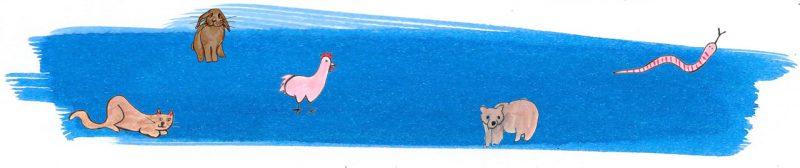 Illustratie door Jantien Baas: Young Scientist Vakantieboek Zomer 2020: bomvol bijzondere beesten!