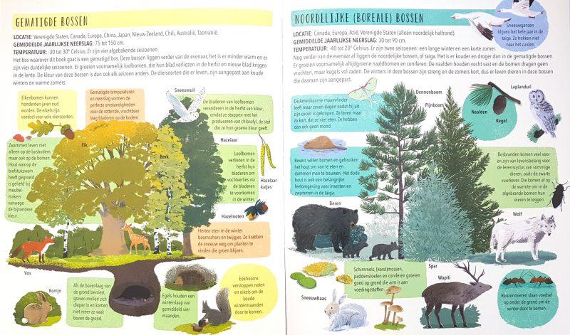 Wie maakt het bos? - Sally Nicholls & Carolina Rabei